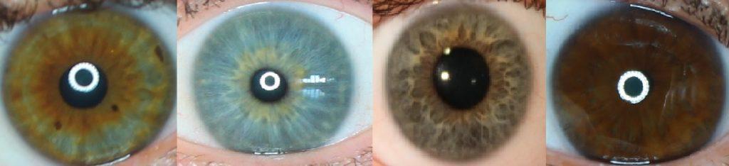 Diversidade da iris humana